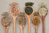 Healing Herbs