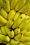Rows of ripe yellow bananas