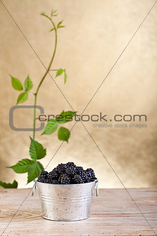 Fresh blackberries in a bucket on old table