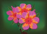Vector branch of tropical pink flowers