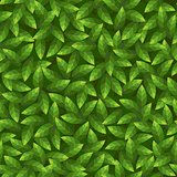 Green leaves pattern. Seamless vector.