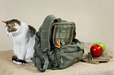 Cat And Backpack