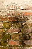 Old bricks moss wall