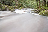 Fast Flowing River in Woodland, Dartmoor, UK.