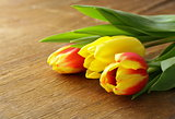 spring flowers tulips on wooden background