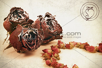 Dry flowers of roses are in vintazhnom style
