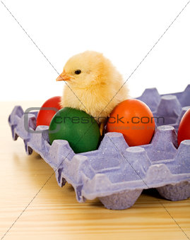 Small chicken with easter eggs