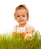 Little girl catching fluffy chicken in the grass - isolated