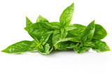 twig fresh basil
