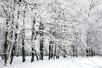 Beautiful Russian Winter
