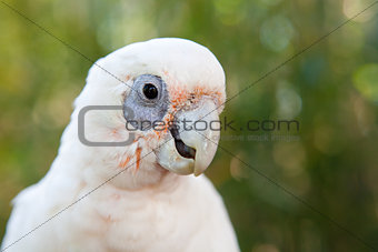 portriat of a parrot