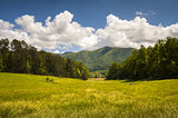 Cades Cove Great Smoky Mountains National Park Spring Scenic Landscape