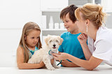 Kids at the veterinary doctor with their pet