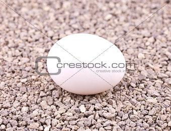 White egg on gravel