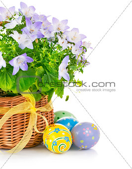 easter eggs with spring flower in basket