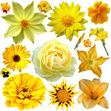 yellow flower collage 