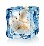 Ice cube and champignon