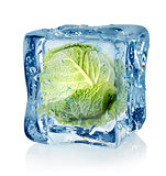 Ice cube and savoy cabbage