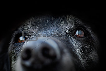 Animal - old dog