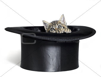 kitten hiding in top hat