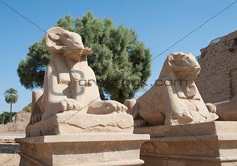 Ram sphinxes at Karnak temple
