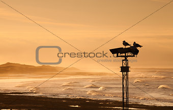 Two seagulls on column at sunset