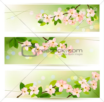 Three spring banners with blossoming tree brunch with spring flo