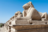 Ram sphinxes at Karnak temple