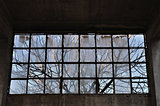 tree branches factory window
