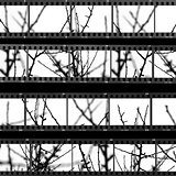 contact sheet with photos of tree branches