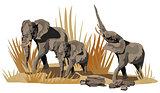 African Elephants on Savannah