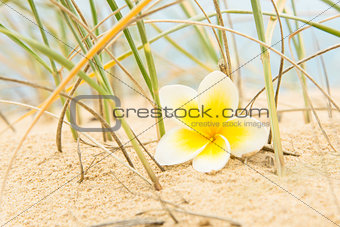 Flower and beach grass