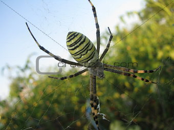 Close up spider