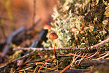 little mushroom in autumn