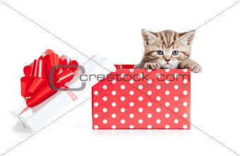 baby cat in red polka dot gift box