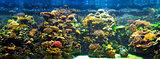 big aquarium panorama