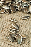 Closeup sunflower seeds on burlap