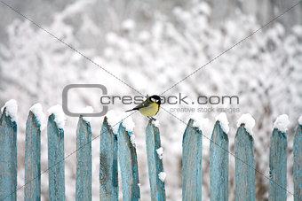 tit on fence