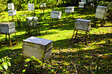 Honey Bee Farm Boxes