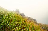 Tall grass in foggy mountain