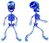 Two walking skeletons