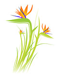 Bird of Paradise Flower (Strelitzia)
