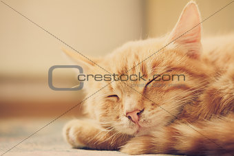 Little Red Kitten Sleeping On Bed