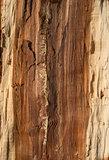 Oak log core
