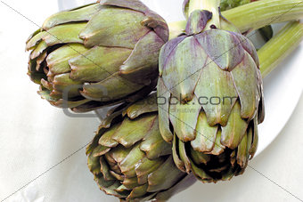 Artichoke plants in natural light