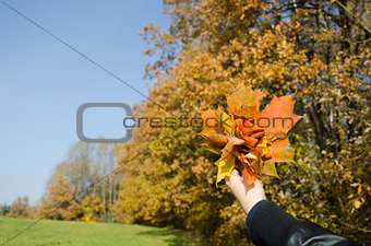 hand hold bunch orange leaves autumn forest trees