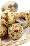 Quail Eggs