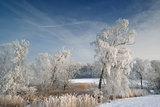 Hoarfrost on trees in rural Denmark