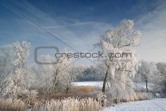 Hoarfrost on trees in rural Denmark
