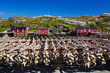 Stock fish on Lofoten